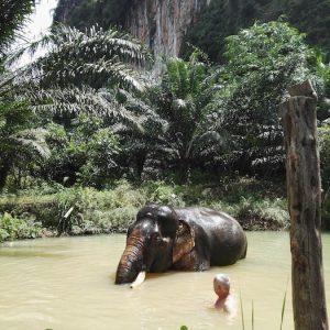 Bathing with Somboon our Khao Sok Elephant