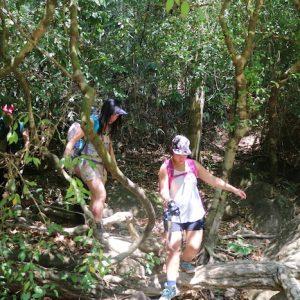 Khao Sok Jungle Trek