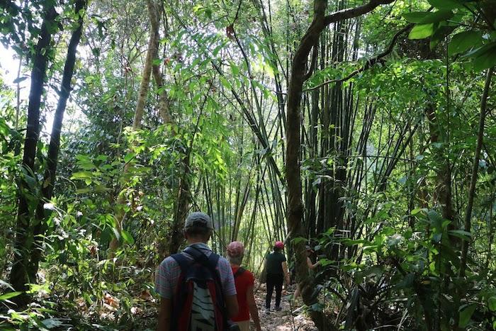 Khao Sok Jungle Trekking Trekkers through the forest