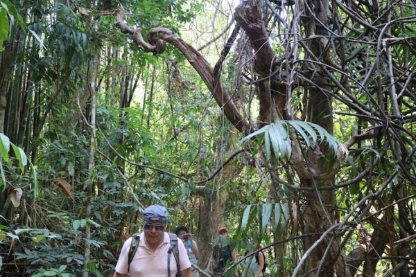 Through the forest Anurak Jungle Trail
