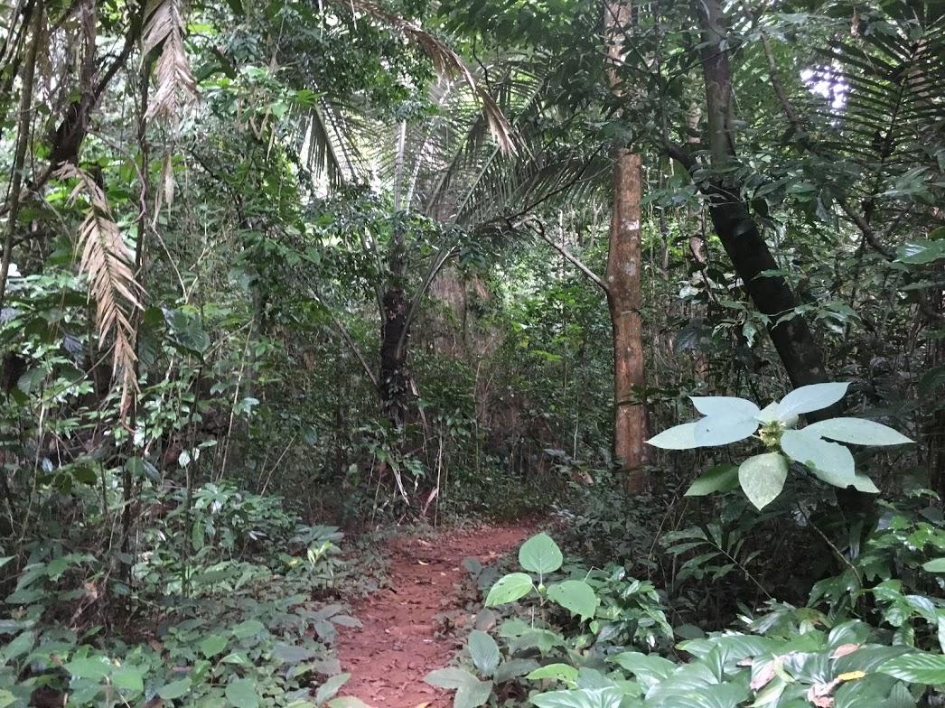 Into the bush Anurak Nature Trail
