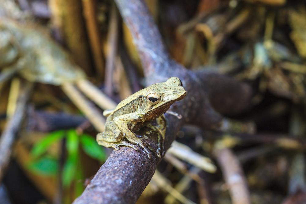 Insight Into Biodiversity of Khao Sok National Park