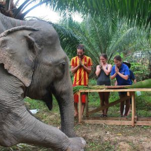 Khao Sok Elephant Experience Frequently asked questions Anurak Elephant Experience