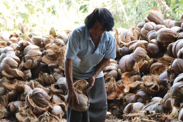 Woman at work on the coconut farm
