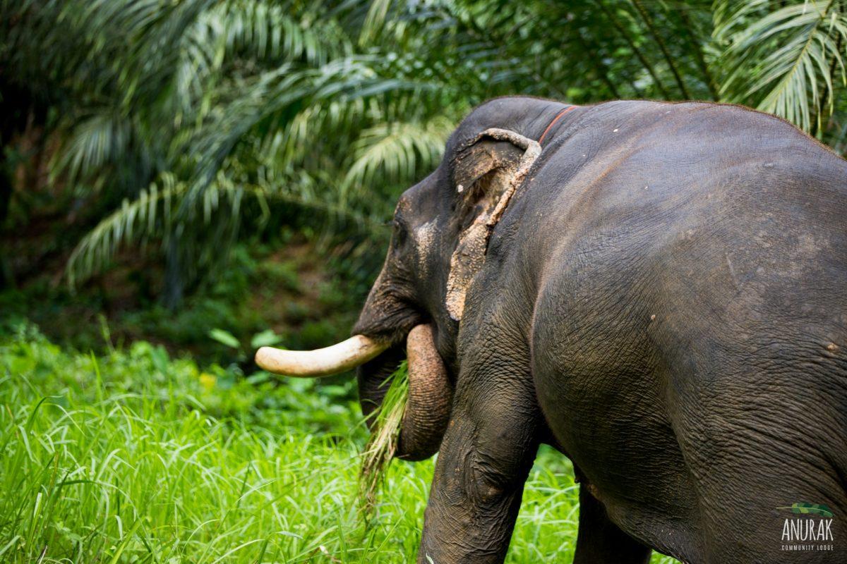 Khao Sok Wildlife