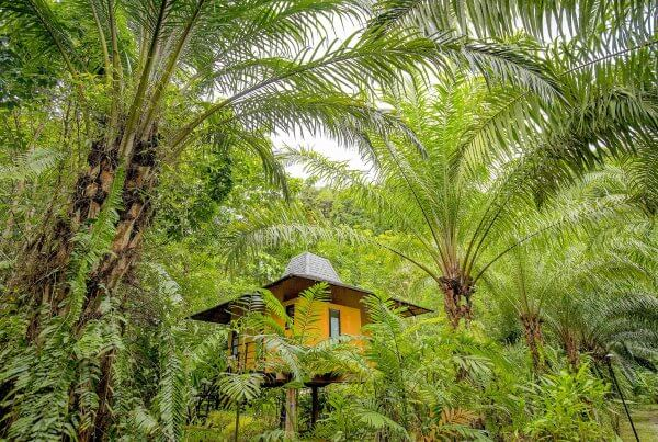 Replacing Oil Palms (Features)-min
