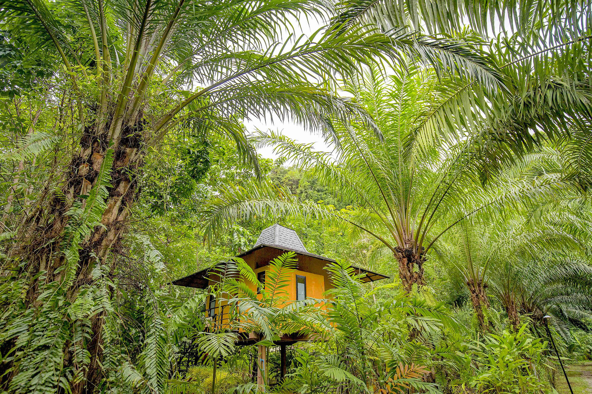 Replacing Oil Palms with Indigenous Forest