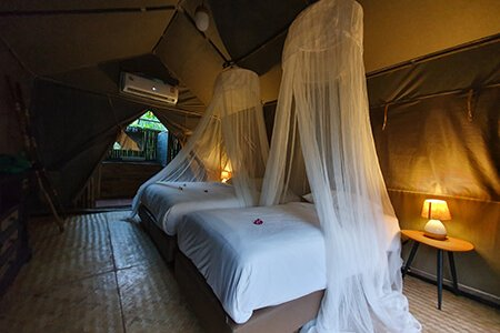 Deluxe Jungle Tent