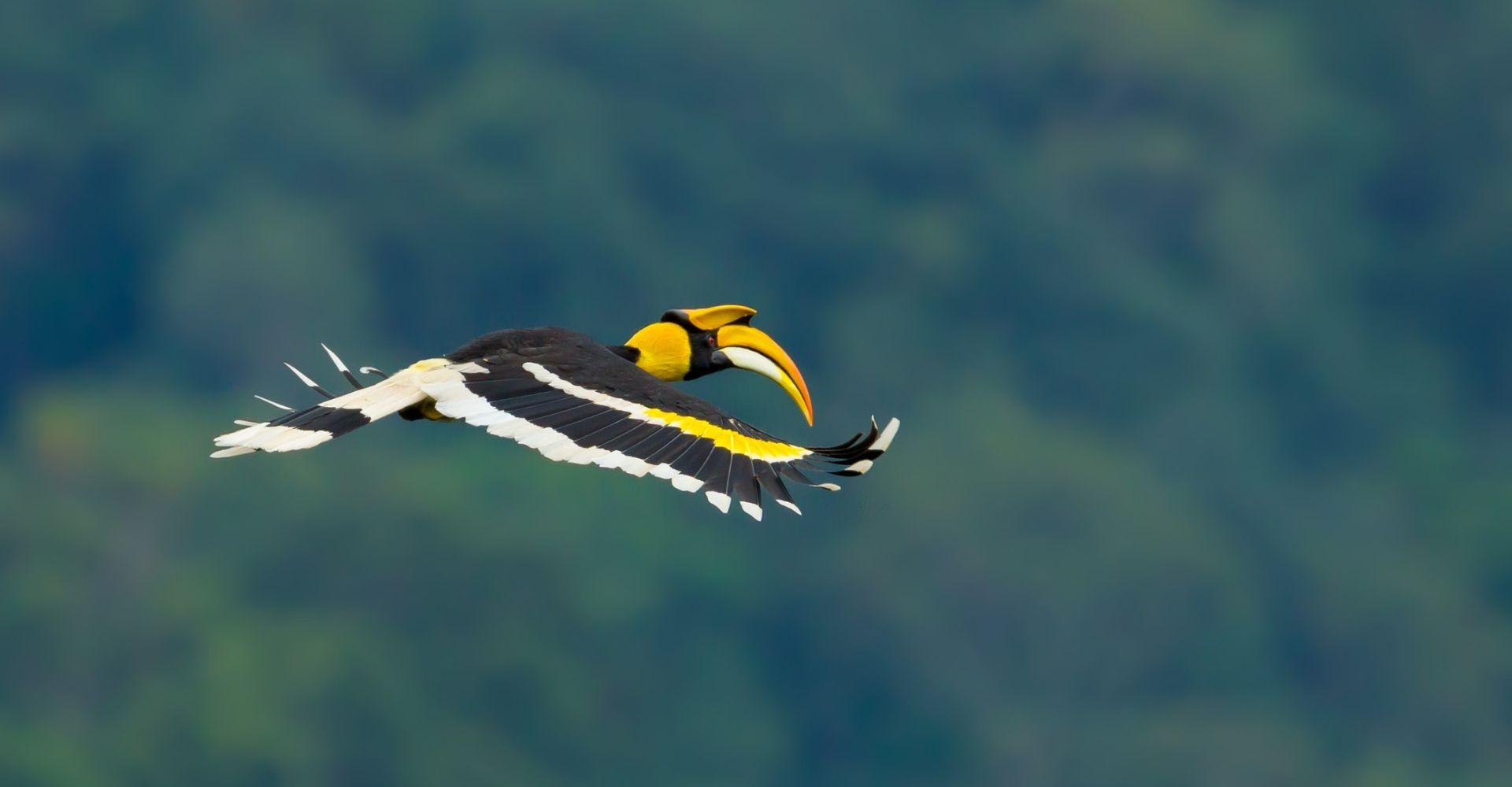 khao-sok-birdlife