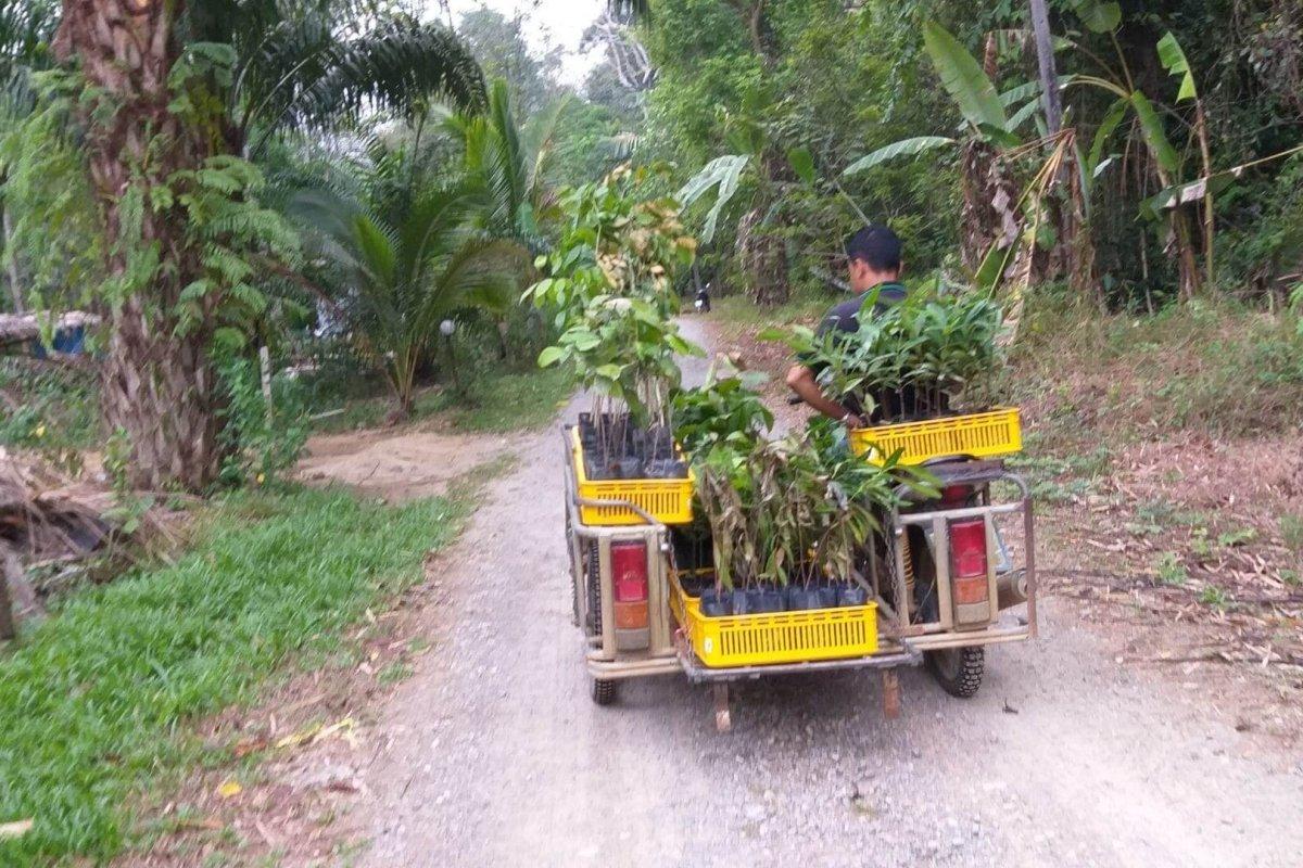 Rainforest Rising