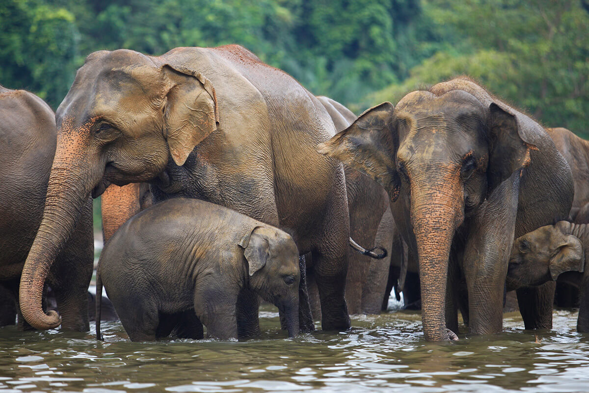 Travel Ivory-Free during Golden Week