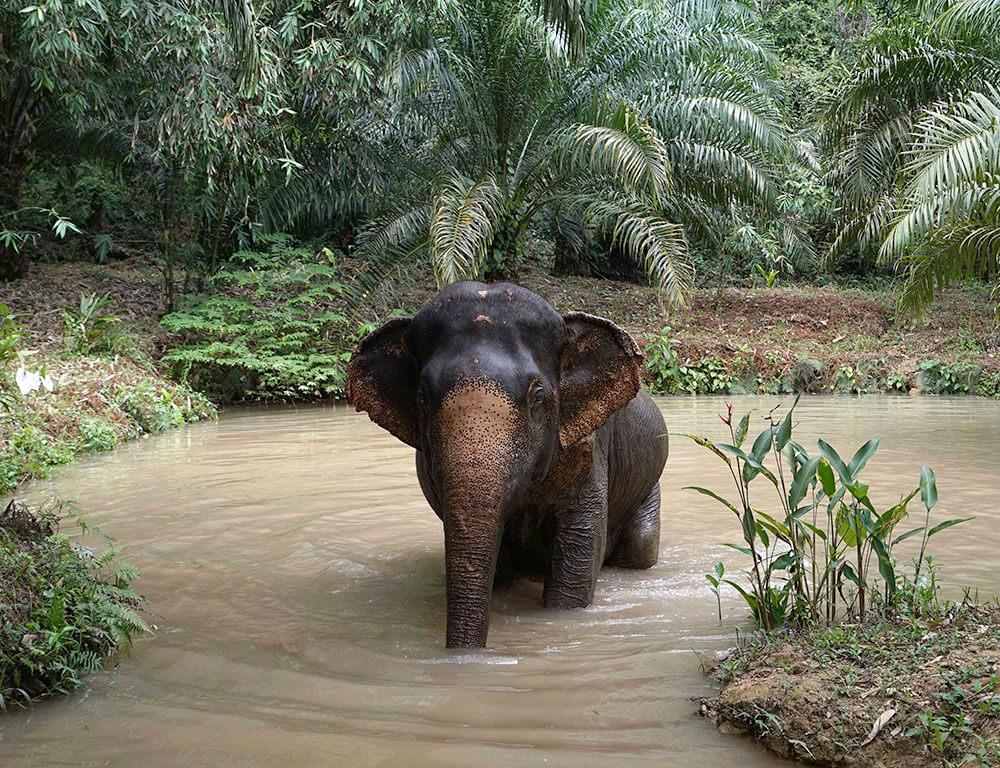 elephant-experience-khao-sok