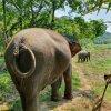 elephant experience khao sok2