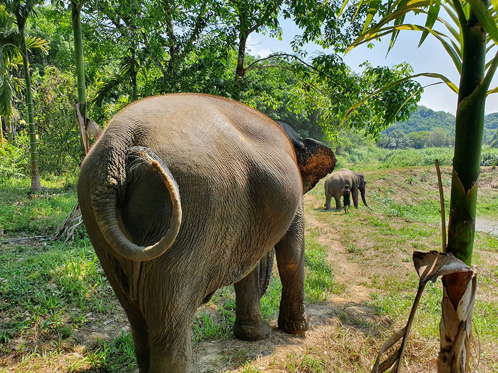 Elephant-friendly Experience in Khao Sok National Park