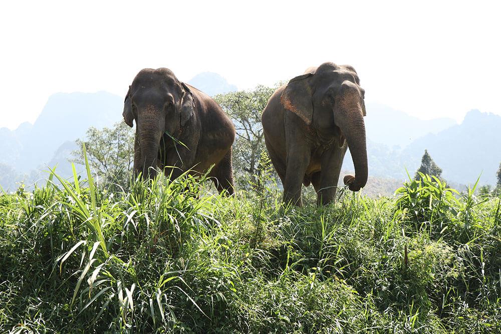 elephant experience khao sok3