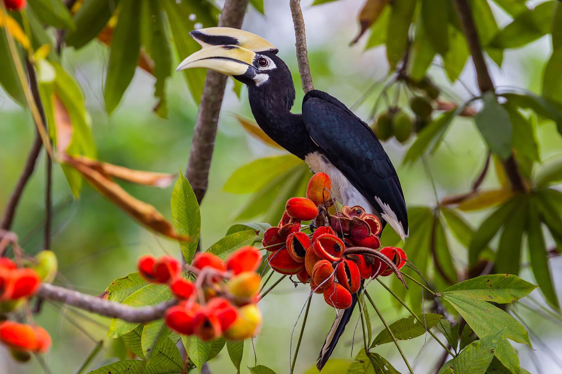 Birdwatching in Khao Sok National Park – Anurak Community Lodge