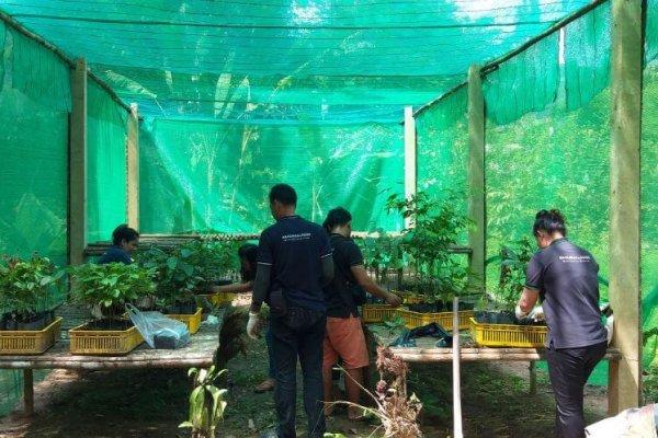 Rainforest Rising 2 (1)